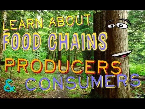 Watch a fun science lesson for kids about producers, consumers, and food chains. Learn what makes a producer so different than a consumer and how they fit in...