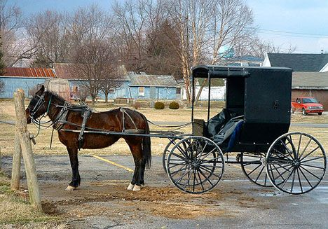 Horse and Buggy Indiana Amish