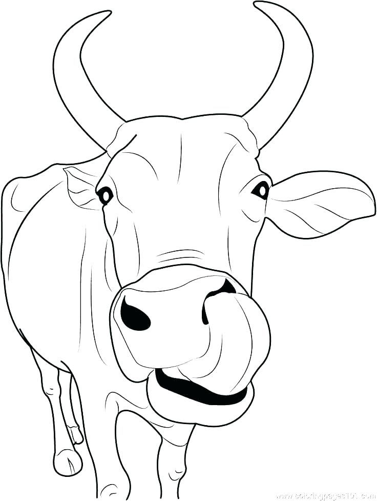 47+ Cow coloring pages free ideas