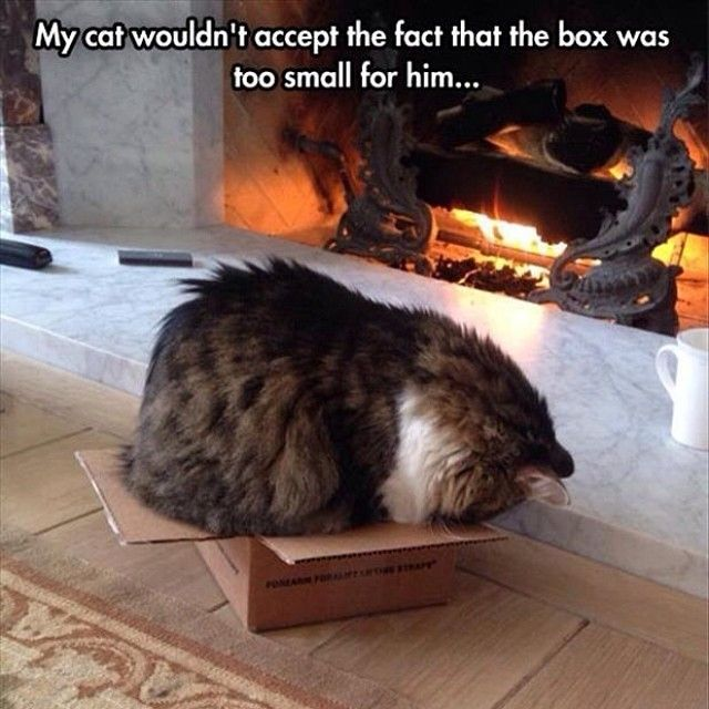 Top 14 Most Funny Pictures About Cat Cute Animal Kitten Dog Photo Idea Easy Idea 9 Cute Animals Cute Cats Crazy Cats