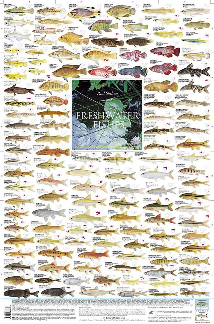 15 best fishing id charts images on pinterest fishing for Freshwater aquarium fish list