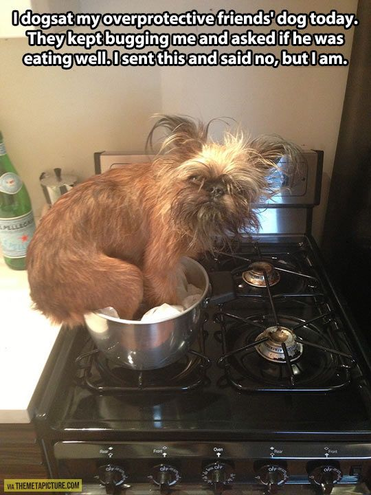funny-dog-kitchen-friends-eating-well