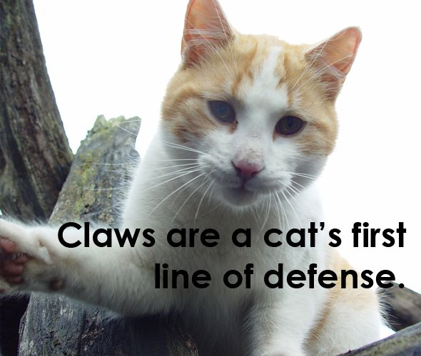 declawing cats humane - photo #17