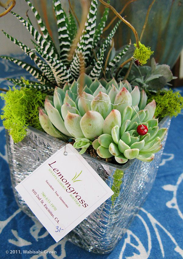 succulent arrangements | Holiday Succulent Arrangements