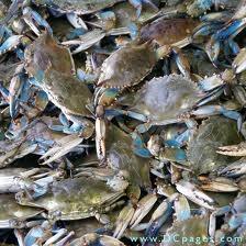 Crabs! Crabs! Crabs!