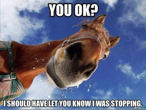 Some horses are so polite that they let you go over the jump before they do.
