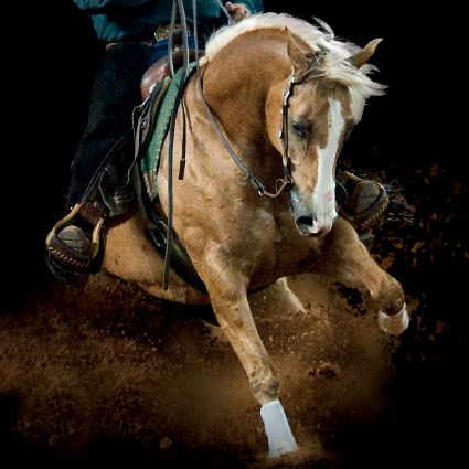 Wimpys Little Chic, 2004 mare.    She is the highest money-earning horse in NRHA history. As the 2007 NRHA Futurity Champion, she is the only reining horse to follow up that win with the National Reining Breeders Classic Derby and NRHA Derby Open Championship titles consecutively.