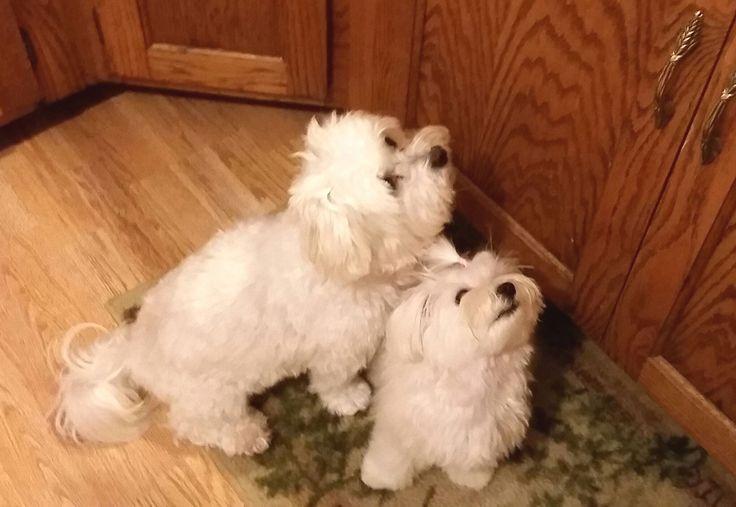 Two little sweetie babies ...