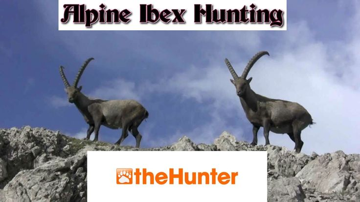 #TheHunter - Alpine Ibex Hunting (240.867 and 254.635 Included) thehunter, the hunter,thehunter species,thehunter reserves,thehunter map,thehunter lodge,thehunter Two Person Tripod Stand,thehunter Two Person Tree stand the hunter 2016, thehunter 2016,