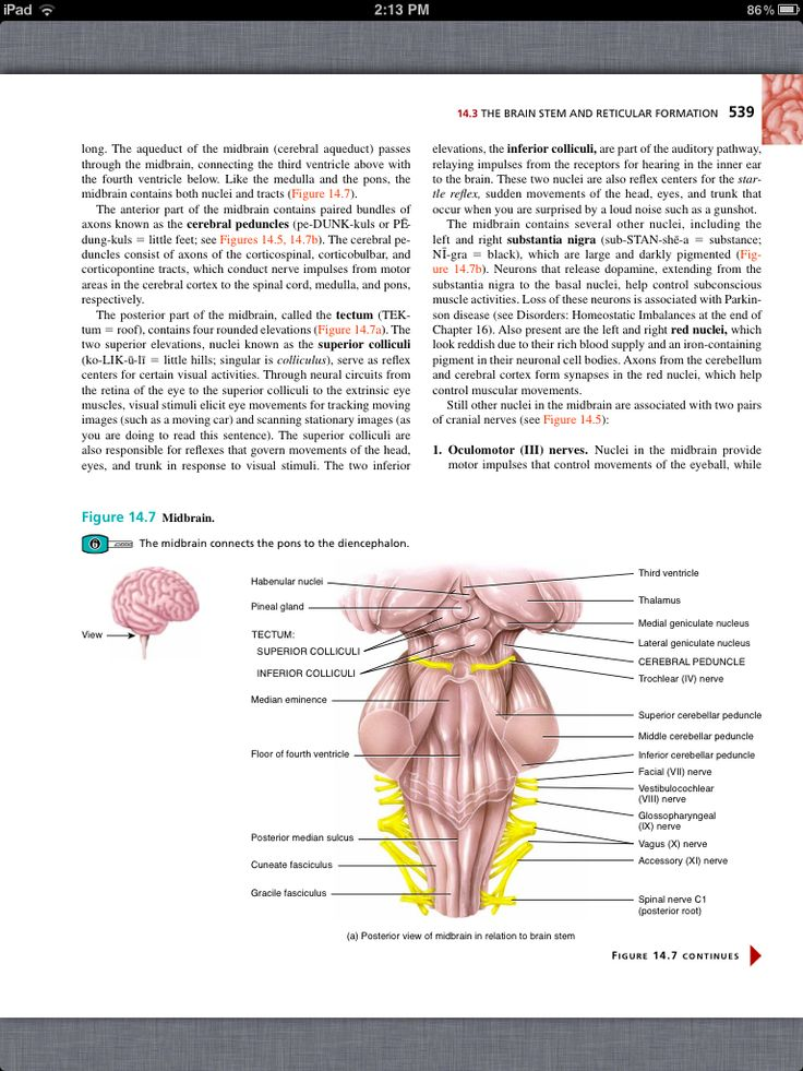 The 55 best Chapter 14, The Brain and Cranial Nerves images on ...