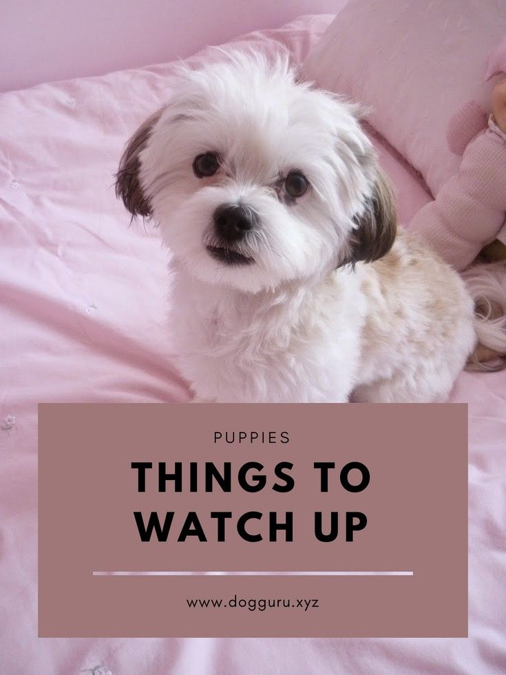Things To Watch Out For The Newborn Puppies Lap Dog Breeds Dogs