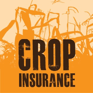 """Crop Insurance Friday: Answering the Question, """"Why?"""""""