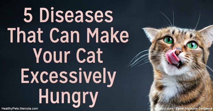 If your cat is suddenly hungry all the time, it's usually a sign of a larger problem and requires a visit to your veterinarian. http://healthypets.mercola.com/sites/healthypets/archive/2016/05/24/cat-excessive-hunger.aspx