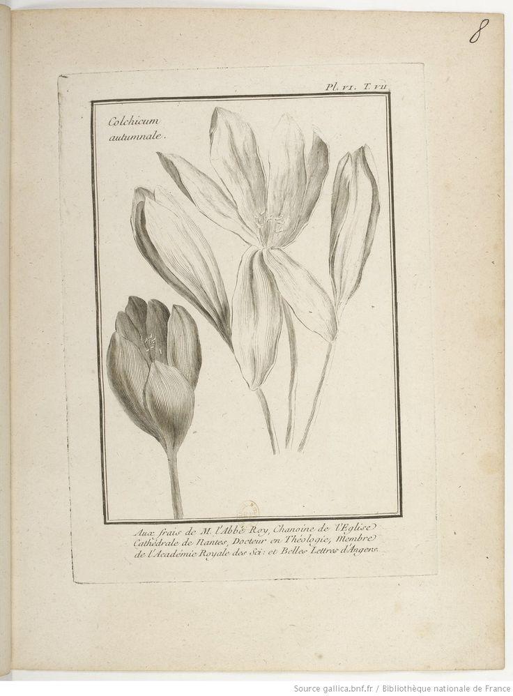 [Colchique d'automne]; Traité historique des plantes qui croissent dans la Lorraine et les Trois Évêchés / par P. J. Buchoz, 1762-1770