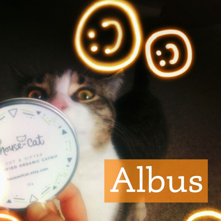 Albus ABSOLUTELY loves our organic catnip. We have to say, it is pretty potent!  http://etsy.me/1H3fEhJ