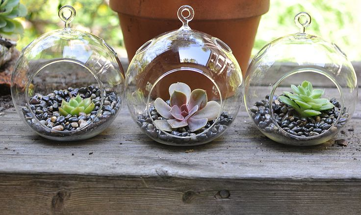 How to Make Hanging Succulent Terrariums | POPSUGAR Home