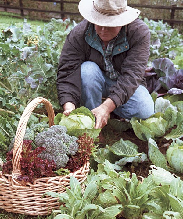 Fascinating  Best Images About Winter Vegetable Gardening On Pinterest  With Inspiring A Winter Vegetable Garden In Northern California The Sweet Rewards Of Winter  Gardening Are Worth The Effort Of Stretching The Season With Endearing Plastic Garden Containers Large Also Ealing Park Gardens In Addition Bents Garden And Cypress Gardens As Well As Dobbies Garden Additionally Garden Metal Wall Art From Pinterestcom With   Inspiring  Best Images About Winter Vegetable Gardening On Pinterest  With Endearing A Winter Vegetable Garden In Northern California The Sweet Rewards Of Winter  Gardening Are Worth The Effort Of Stretching The Season And Fascinating Plastic Garden Containers Large Also Ealing Park Gardens In Addition Bents Garden From Pinterestcom