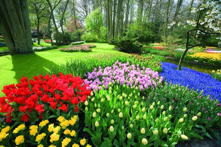 Jard n de tulipanes naturaleza flores jardines pinterest - Jardines de tulipanes en holanda ...