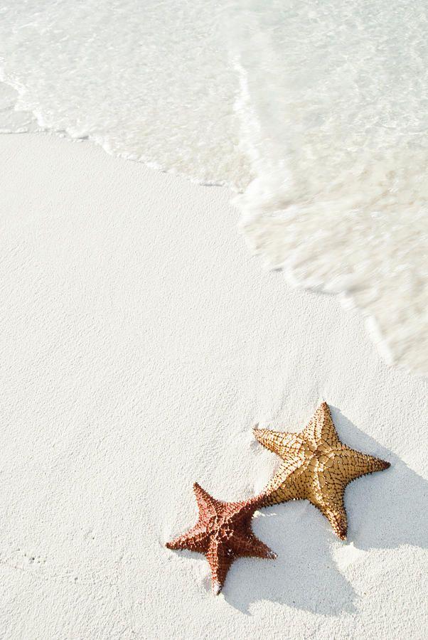 Aruba starfish, white sand and rolling tide.