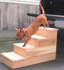 Pet Steps   Dog Steps