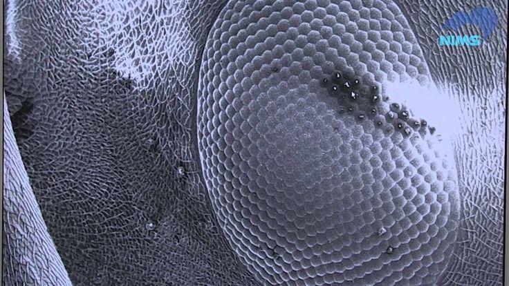 電子顕微鏡でアリのヒゲそり!?