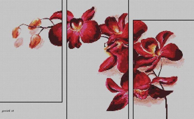 Gallery.ru / Фото #1 - *****orquideas***** - celita