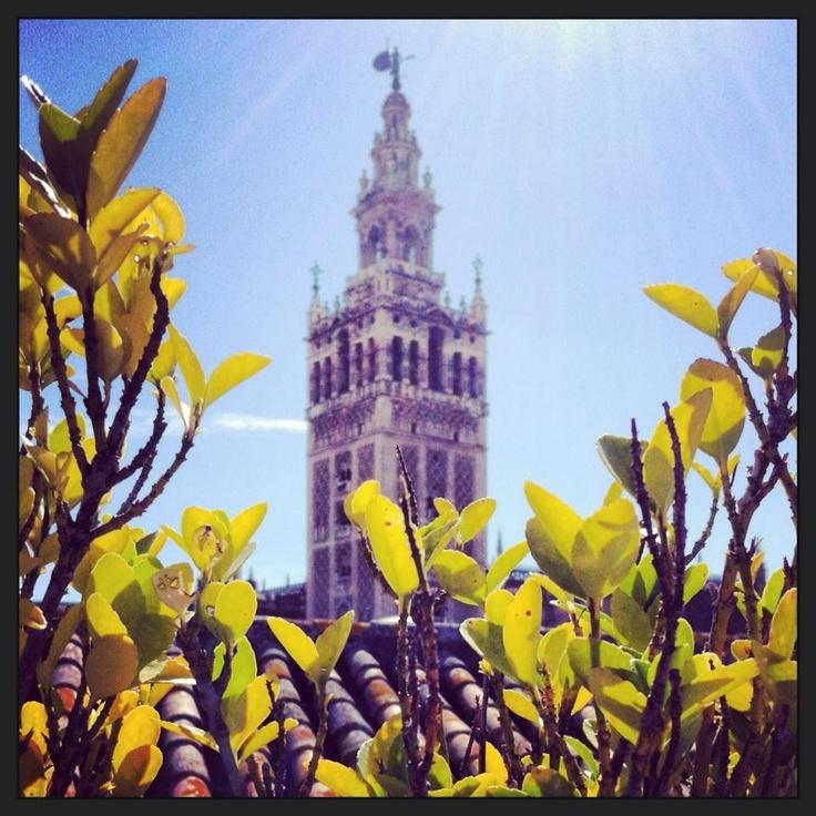 Giralda de primavera. Sevilla
