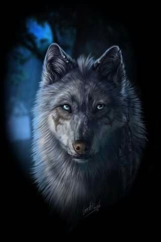 Wolfspirit Cherokee Wolf Zeichnung Anime Google Beautiful Wolfe