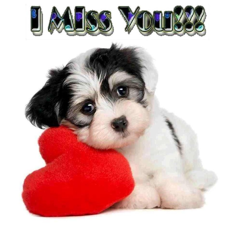 25 best valentines messages images on pinterest - Valentine s day animal pics ...