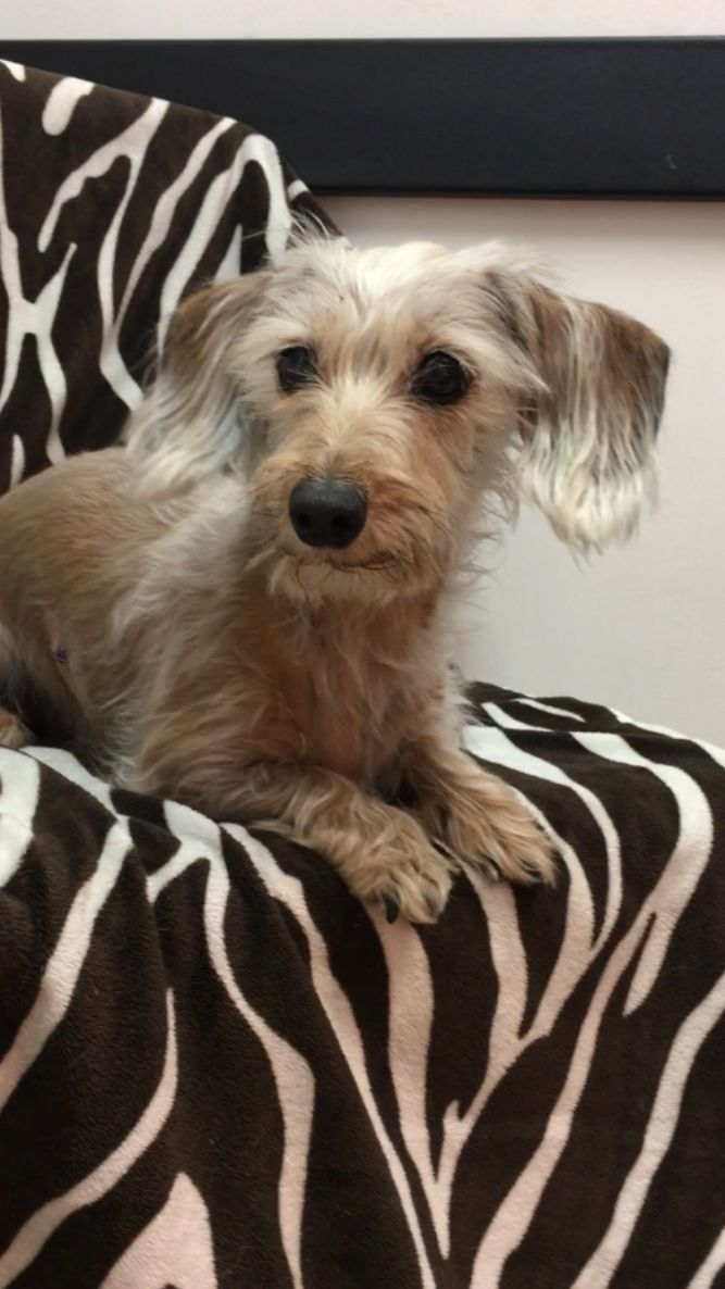 Adopt Isla On Petfinder In 2020 Dog Adoption Rescue Dogs Pets Movie