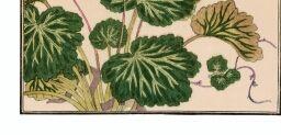 [Album des insectes choisis, par Utamaro. Volume 2]