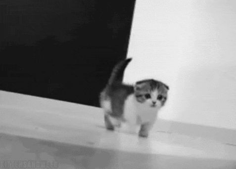 15 Cutest Kitten Gifs Of 2012