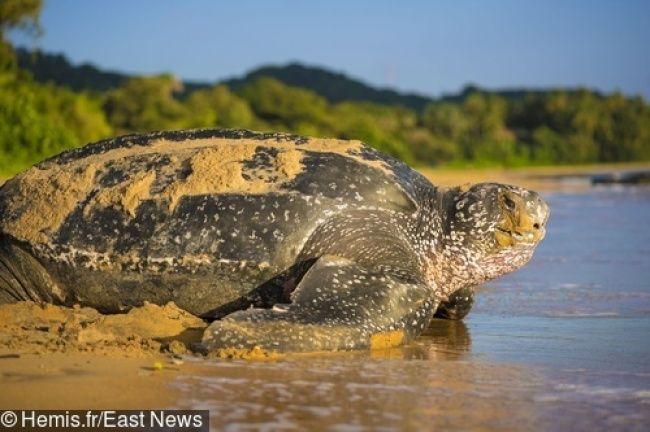 13 مخلوق عملاق سيدهشون كل من ينظر إليهم Animals Turtle