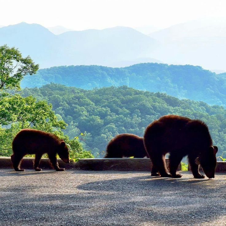 329 Best My Smoky Mountains Images On Pinterest