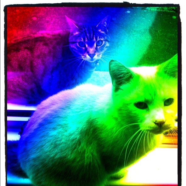 """RAINBOW KITTEHS"""