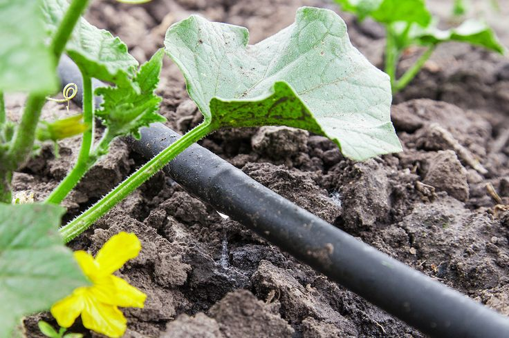From ModernFarmer.com - How to build a drip irrigation system.