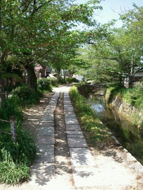 哲学の道 #Tetsugaku no Michi (Philosopher's Walk)