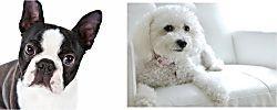 ¿Crees que tu perro y tú estáis hecho el uno para el otro?