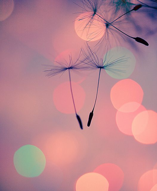 Make a wish. Bokeh