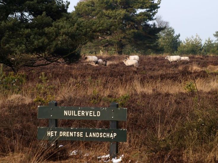 Nuilerveld