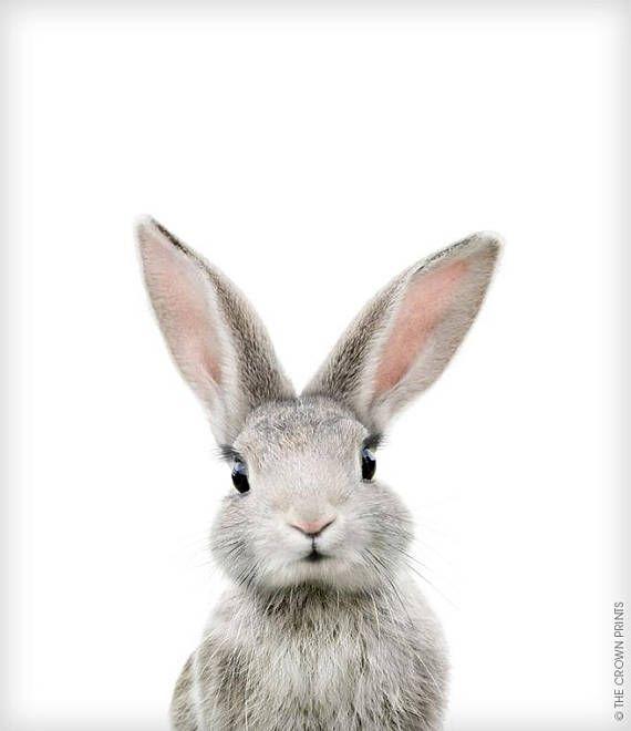 Rabbit print, Bunny, Animal print, Baby rabbit art…
