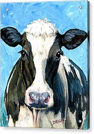 Holstein Cow 1 Head And Chest Acrylic Print by Dottie Dracos