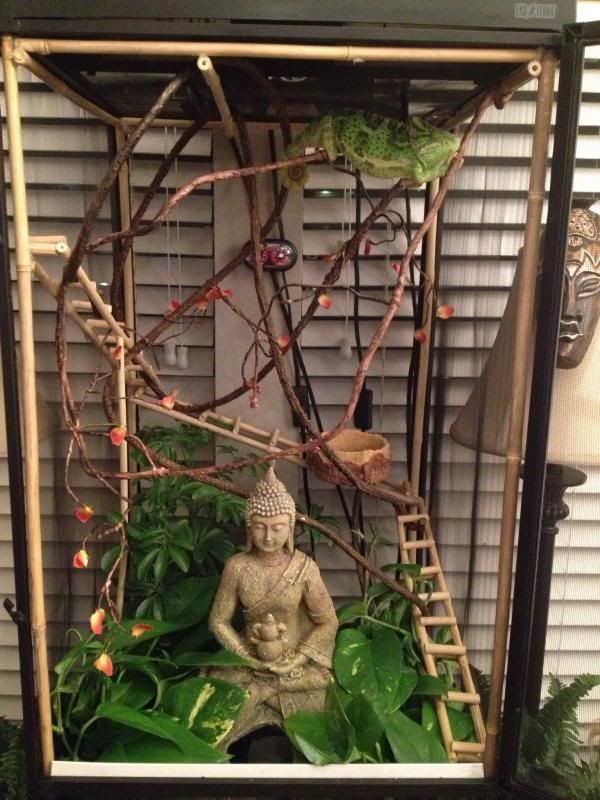 1000+ ideas about Reptile Cage on Pinterest | Reptile Enclosure ...