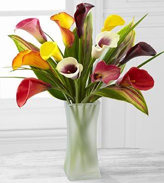 Calla lily | Fair Flowers