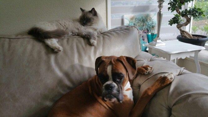Ziggy en Kappa