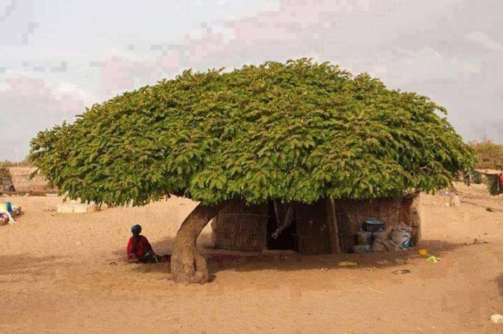 El árbol de tejado
