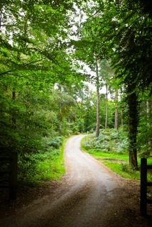 The treelined, winding driveway at Cain Manor  - lush Surrey countryside