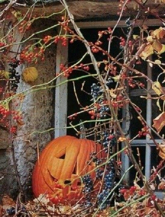4152 best halloween decorations images on pinterest