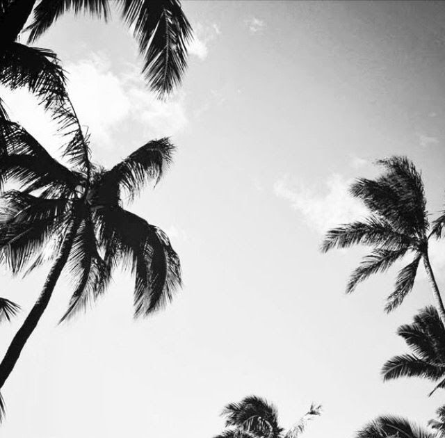 Iphonewallpaper Vintage The Best Awesome Black And White Wallpaper Photography For Iphone The Best Aw Palm Trees Wallpaper Tree Wallpaper Palm Tree Background