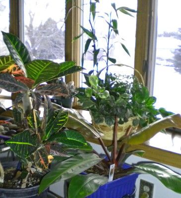 how to get rid of millipedes in indoor plants